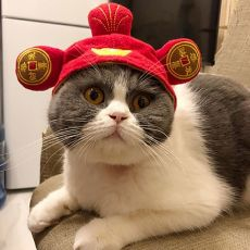 Funny Halloween Christmas Dress Up Costume Soft Pet Hat Cosplay Animal Keep Warm Colorful Chinese Style Headwear Cat Accessories